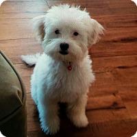 Adopt A Pet :: Lacey - Elmwood Park, NJ