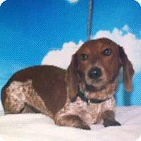Adopt A Pet :: Alfred Von Furter - Newport, KY