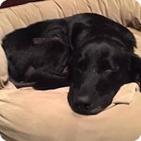 Adopt A Pet :: Ava - Jay, NY