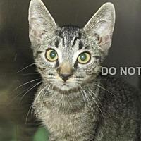 Adopt A Pet :: Fritz - Rocky Mount, NC