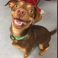 Adopt A Pet :: Mocha - Acushnet, MA