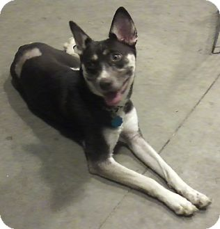 Husky Mix Dog for adoption in Beacon, New York - Princess