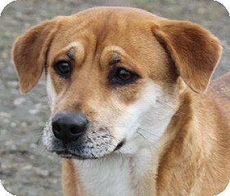 Labrador Retriever/Mountain Cur Mix Dog for adoption in New Roads, Louisiana - Ellie Mae