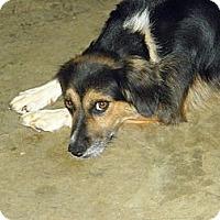 Adopt A Pet :: Paddy - York, SC