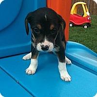 Adopt A Pet :: Kutcher - Linton, IN