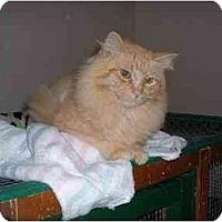 Adopt A Pet :: Simba - Lethbridge, AB