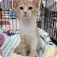 Adopt A Pet :: Mango - Vero Beach, FL
