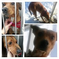 Adopt A Pet :: Lily - Brant, ON