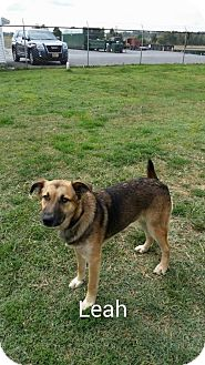 German Shepherd Dog Dog for adoption in Greenville, Kentucky - LEAH
