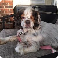 Adopt A Pet :: Mocha -Adopted! - Kannapolis, NC