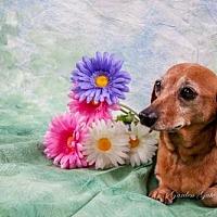 Adopt A Pet :: Michelle - Elizabethtown, PA