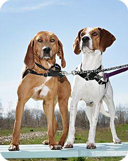 Hound (Unknown Type) Mix Dog for adoption in Bellingham, Washington - Jane