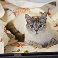 Adopt A Pet :: Nonna - Pryor, OK