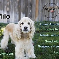 Adopt A Pet :: Milo - Sherman Oaks, CA