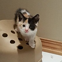 Adopt A Pet :: Mimi - Chicago, IL