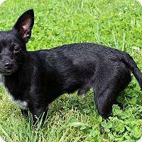 Adopt A Pet :: Sparkles - Waldorf, MD