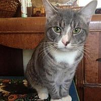 Adopt A Pet :: Two - Colonial Beach, VA