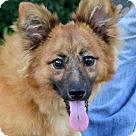 Adopt A Pet :: Firecracker