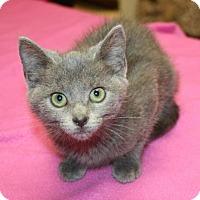Adopt A Pet :: Blu - Cottageville, WV