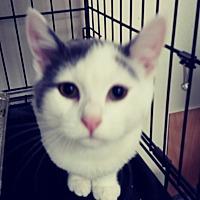 Adopt A Pet :: Rizzo - Trevose, PA