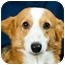 Photo 2 - Corgi Dog for adoption in Anna, Illinois - WILLOW