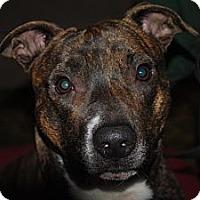 Adopt A Pet :: Chiki, sweet, smart,  loving - Sacramento, CA