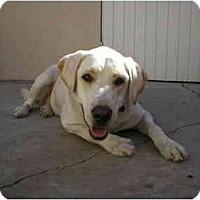 Adopt A Pet :: SugarDog - Chimayo, NM