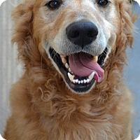 Adopt A Pet :: Mudflap - Knoxville, TN