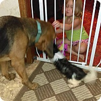 Adopt A Pet :: Rufus - Fayetteville, AR