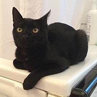 Adopt A Pet :: Sidney - Santa Rosa, CA