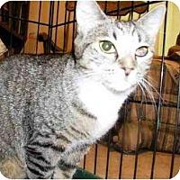 Adopt A Pet :: Jessie - East Stroudsburg, PA