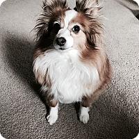 Adopt A Pet :: Jinx - Bend, OR