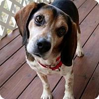 Adopt A Pet :: Garth Brooks - Atlanta, GA