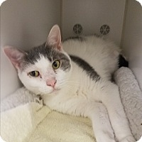 Adopt A Pet :: Cody - Indianapolis, IN