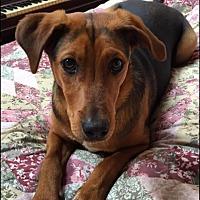 Adopt A Pet :: Bobby - Sagaponack, NY