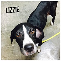 Adopt A Pet :: Lizzie (7/27/17) - Sanford, NC