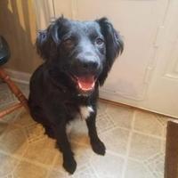 Adopt A Pet :: Sally Momma - Walpole, MA
