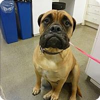 Adopt A Pet :: Kayla - Lakeport, CA