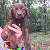 Adopt A Pet :: Ida (NY-Sarah) - Sherburne, NY