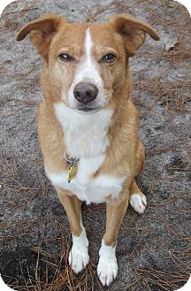 Border Collie Mix Dog for adoption in Forked River, New Jersey - Pooh