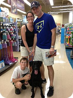 Labrador Retriever Mix Dog for adoption in Olive Branch, Mississippi - Aztec-ADOPTED!