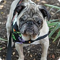 Adopt A Pet :: Ty - Austin, TX