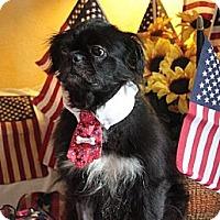 Adopt A Pet :: Linus - Richmond, VA