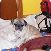 Adopt A Pet :: BRIDGET - Warren, NJ