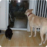 Adopt A Pet :: Maggie - Courtesy - No Fee - Vancouver, BC
