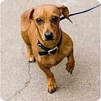 Adopt A Pet :: Roxie - Portland, OR