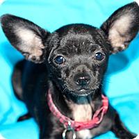 Adopt A Pet :: Pixie - Kempner, TX