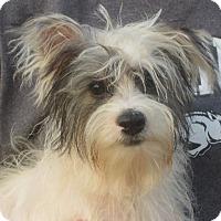 Adopt A Pet :: Luther - Salem, NH