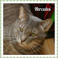 Adopt A Pet :: Hercules - Island Heights, NJ