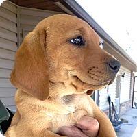Adopt A Pet :: *Jennie - PENDING - Westport, CT